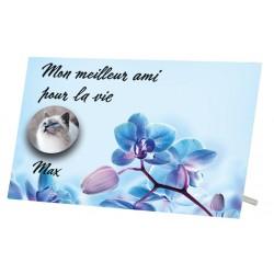 Plaque Funéraire Chat Fleur Bleue