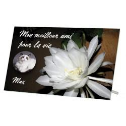 Plaque Funéraire Chat Fleur Blanche